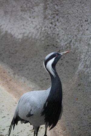 Idaho Falls Zoo at Tautphaus Park : Crane