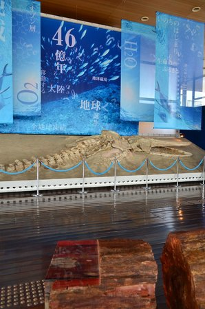 Gamagori Museum of Earth: 生命の海科学館の内部
