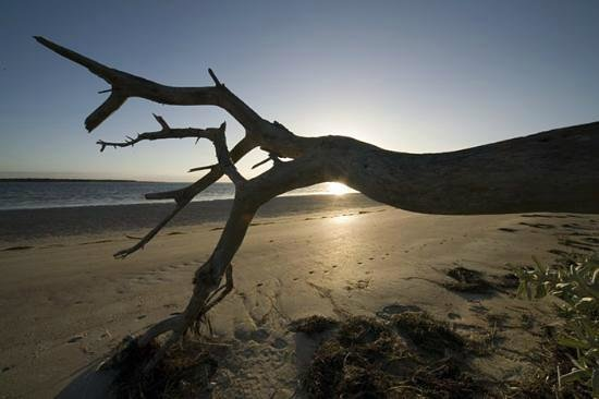Beachside Retreat West Inlet: Dead tree on the beach