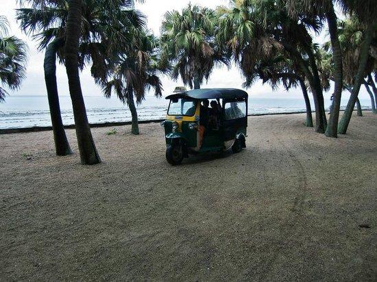 Aoshima Island: 乗り合いタクシーと亜熱帯植物
