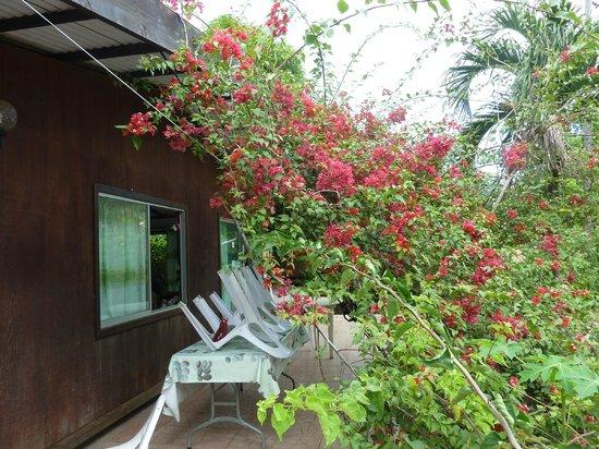 Pension Chez Rosina : le jardin de devant