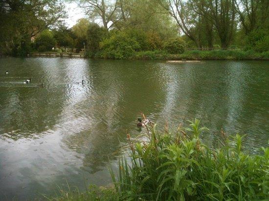 The Richmond Arms: village pond