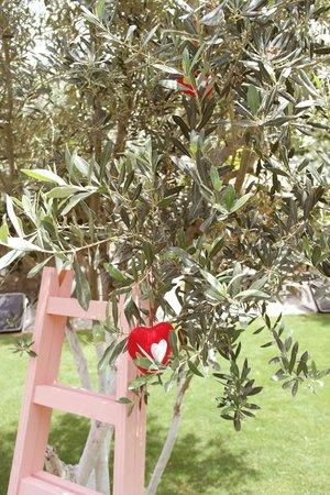 Vintage Boutique Hotel Alacati: Pink ladder & Olive tree