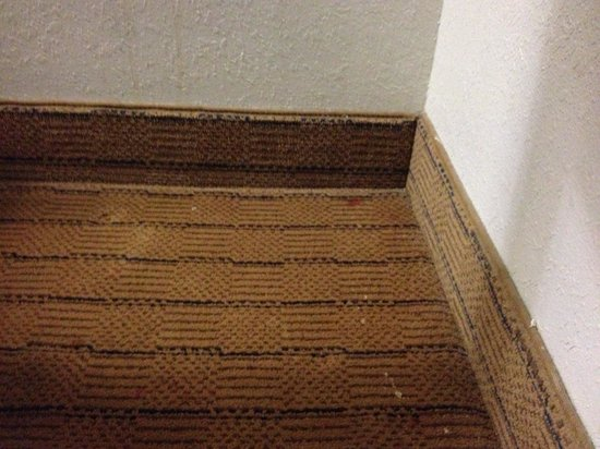 Holiday Inn Express Tampa - Rocky Point Island: Dirty carpet
