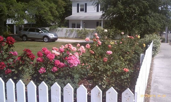 Lois Jane's Riverview Inn: Amazing rose gardens