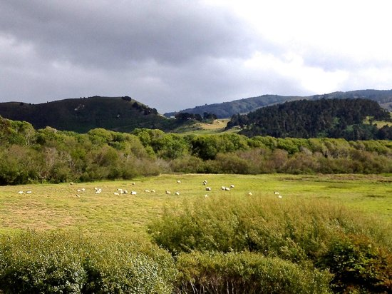 Mission Ranch: I counted 30 sheep.  Then I slept very soundly.