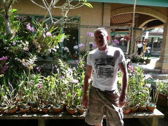 Puri Taman Sari : Orchidees