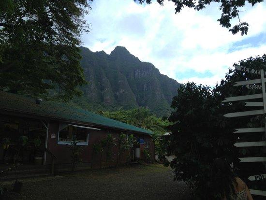 Tropical Farms Macadamia Nut Farm and Farm Tour: view of mountains
