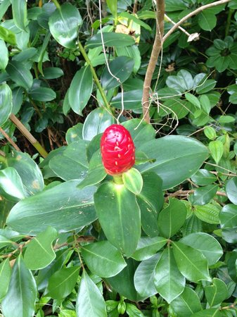 Hoomaluhia Botanical Gardens: flower