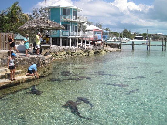 sharks cottages picture of staniel cay yacht club staniel cay rh tripadvisor co za staniel cay cottages bahamas staniel cay cottages bahamas