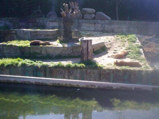 Zoológico de Vigo: leon