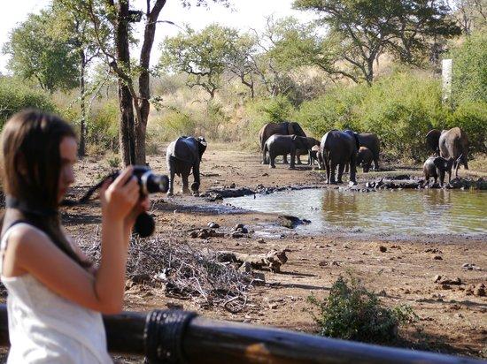 Tuningi Safari Lodge: View from dining area