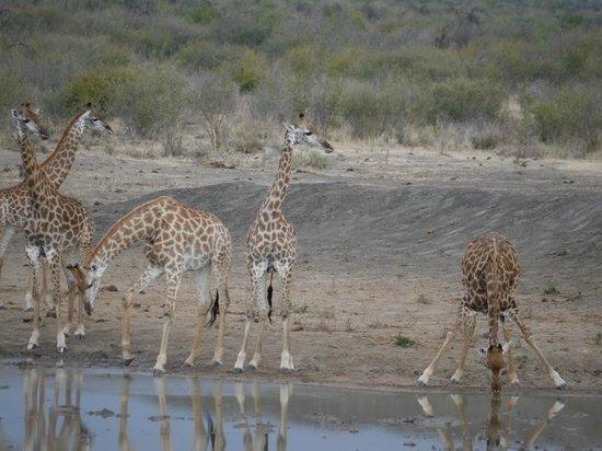 Tuningi Safari Lodge: Safari