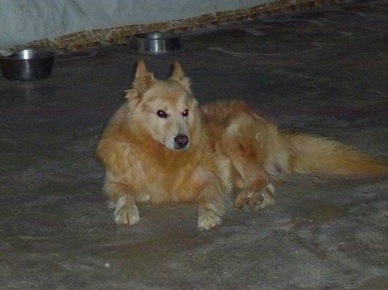 Hotel Cuenca de Oro : Hotelhund Apollo