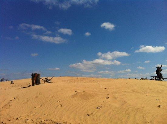 De Hoge Veluwe National Park: zandvlakte