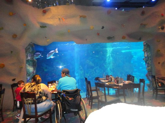 While You Eat You Can Watch The Mermaids And Fish Swim