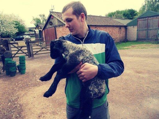 Stonehurst Family Farm and Museum: Cute lamb!