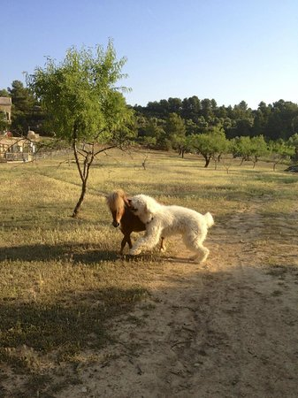Nuestra Posada: our dog and pony playing