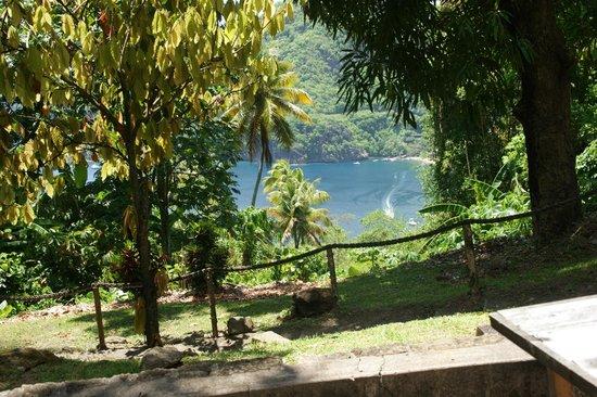 Diamond Waterfalls: views from plantation