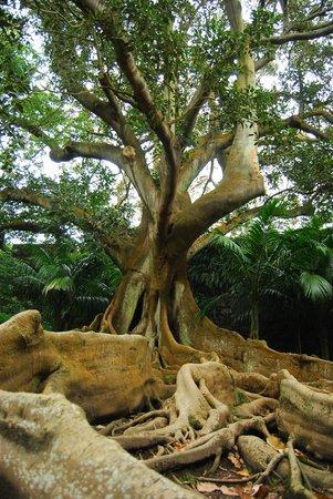 Jardim Jose do Canto: UNA PIANTA DEL GIARDINO