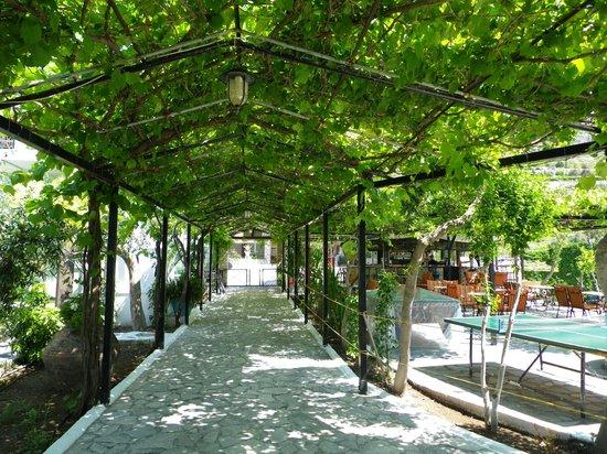 Evelin Hotel: shady walkway