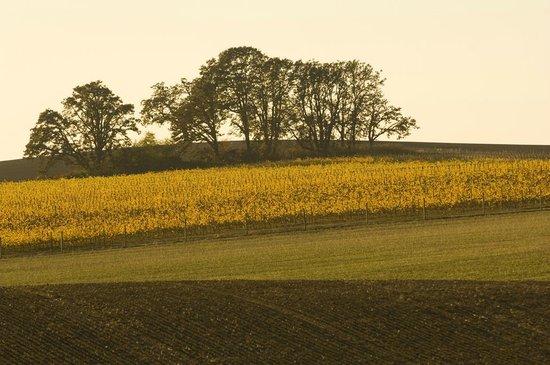 Dobbes Family Estate: Our estate vineyard, Larkin Estate, in West Salem