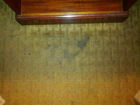 Best Western Plus Hotel & Conference Center: Nasty stain right between the beds