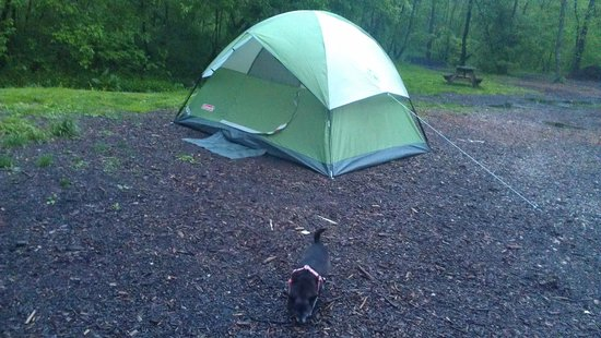 Gettysburg Campground: Dog friendly!