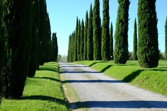 Agriturismo La Sovana: Alameda de entrada do La Sovana