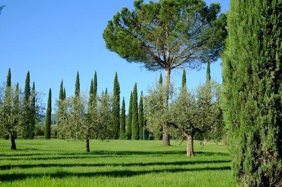 Agriturismo La Sovana: Jardns do La Sovana