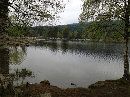 Sognsvann Lake: Sognsvann i slutten av mai