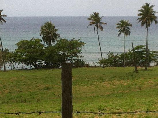 Blue Boy Inn : Tres Palmas Beach