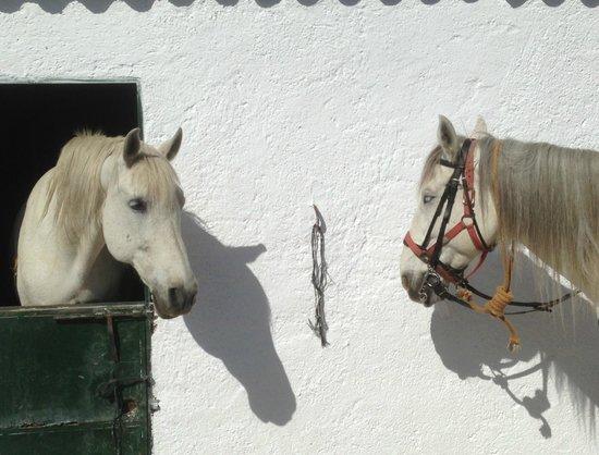 Montañas de La Alpujarra: Back at the barn