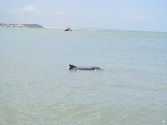 """Dolphins Bay: Baía dos Golfinhos/ RN """""""" Fantástico encontrar os golfinhos"""""""""""