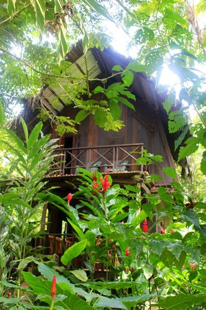 Red Frog Bungalows: Your beach bungalow