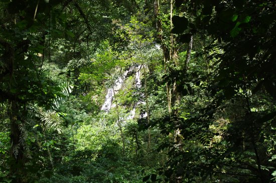 El Chorro Macho: Cascada del chorro del Macho tras la vegetacion