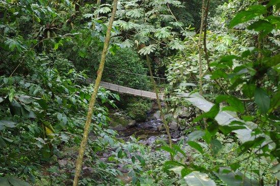 El Chorro Macho: Cascada chorro del Macho - Sendero