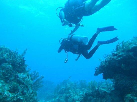 Mahahual Dive Centre: Mahahual1