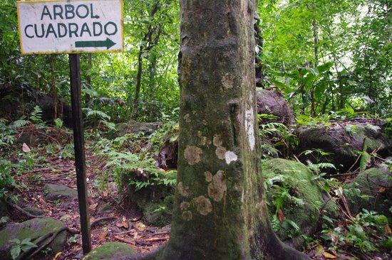 Los Arboles Cuadrados (The Square Trees)