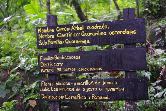 Los Arboles Cuadrados (The Square Trees) : Arbol Cuadrado