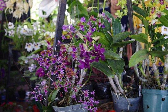 Sunday Market : Mercado del Valle Anton - Flores