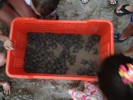 Pacifica Resort Ixtapa: Got to release sea turtles!
