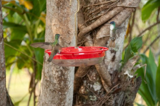 Hidden Valley Inn: the amazing hummingbird feeder by the pool