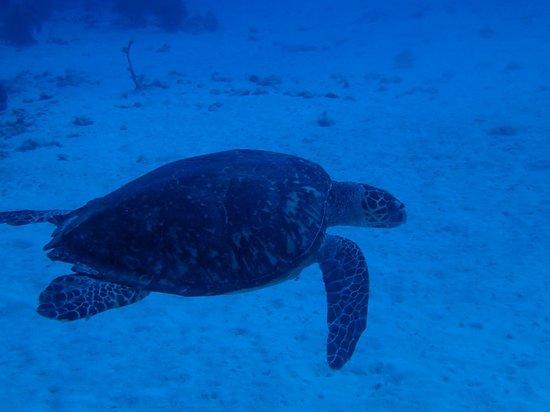 Sundivers: Turtle 1