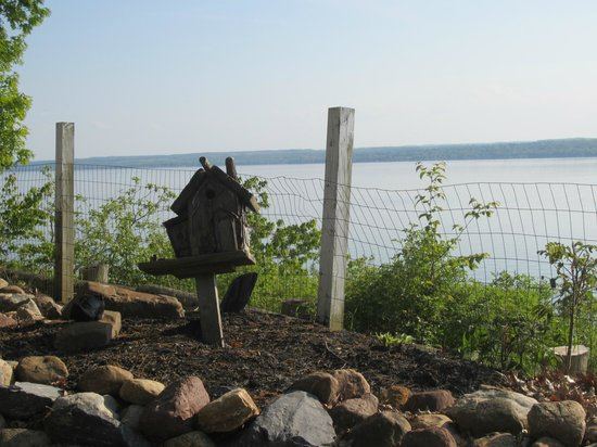Paradise on the Lake Bed and Breakfast: View from the yard