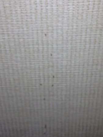 Crowne Plaza Springfield: more ants climbing up the wall