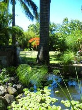 Haiku Plantation Inn: Maui Bed and Breakfast: Pond with waterfall