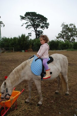 Taras Richmond Farmstay: Riding The Pony