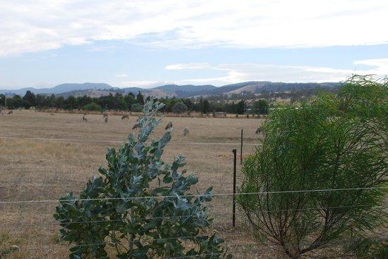 Taras Richmond Farmstay: Farmstay Views