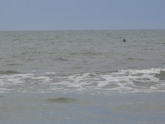 Turtle Beach Inn: dolphin